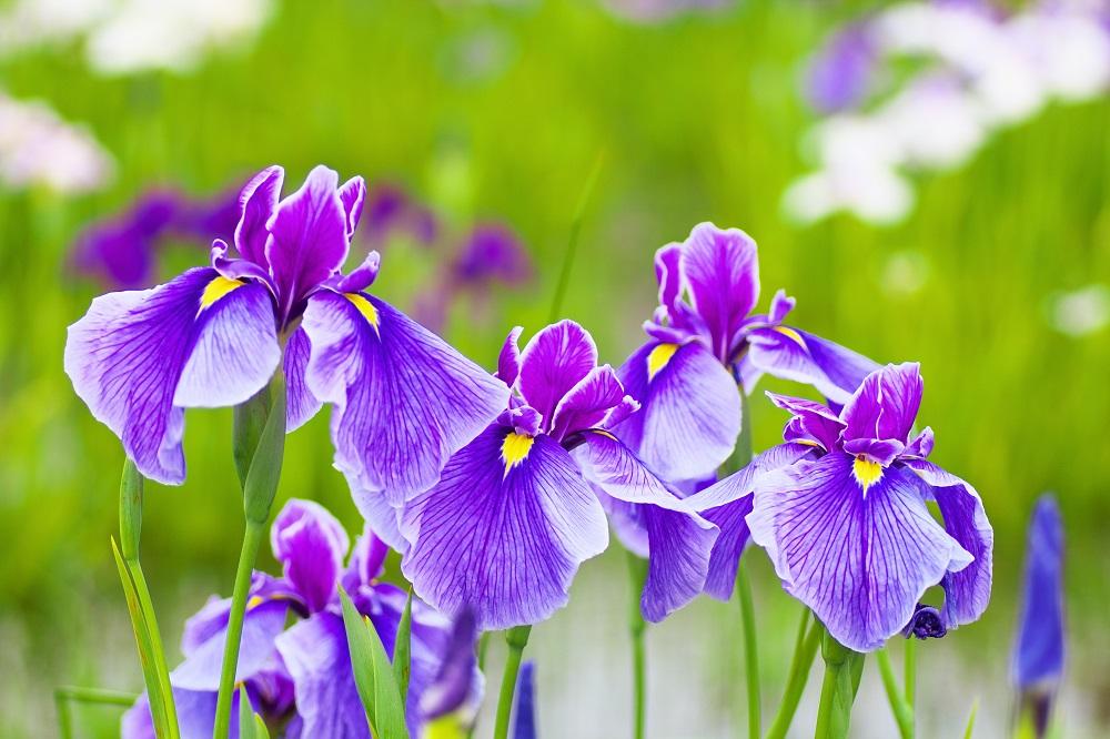 Top 20 Cele Mai Frumoase Flori Din Lume Blogul Travelminit Ro