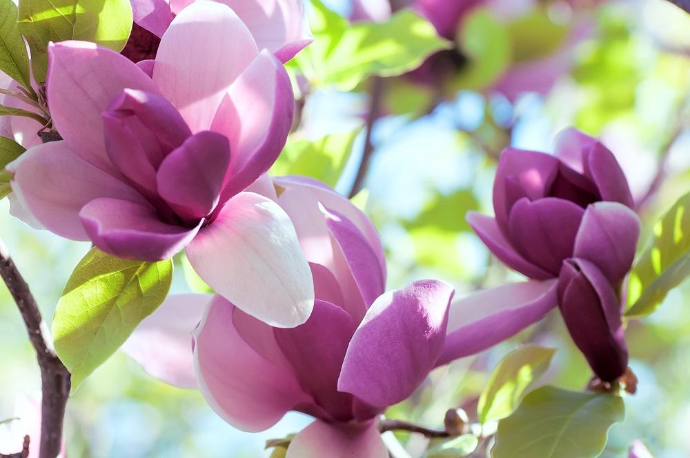 Top 20 Cele Mai Frumoase Flori Din Lume Blogul Hotelgururo