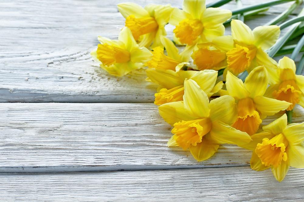 Narcise, foto Jelena Yukka