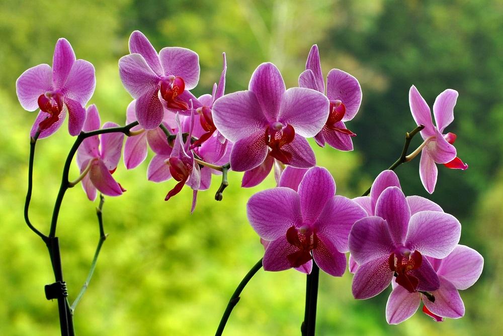 Orhidee, foto Marian Lazaro
