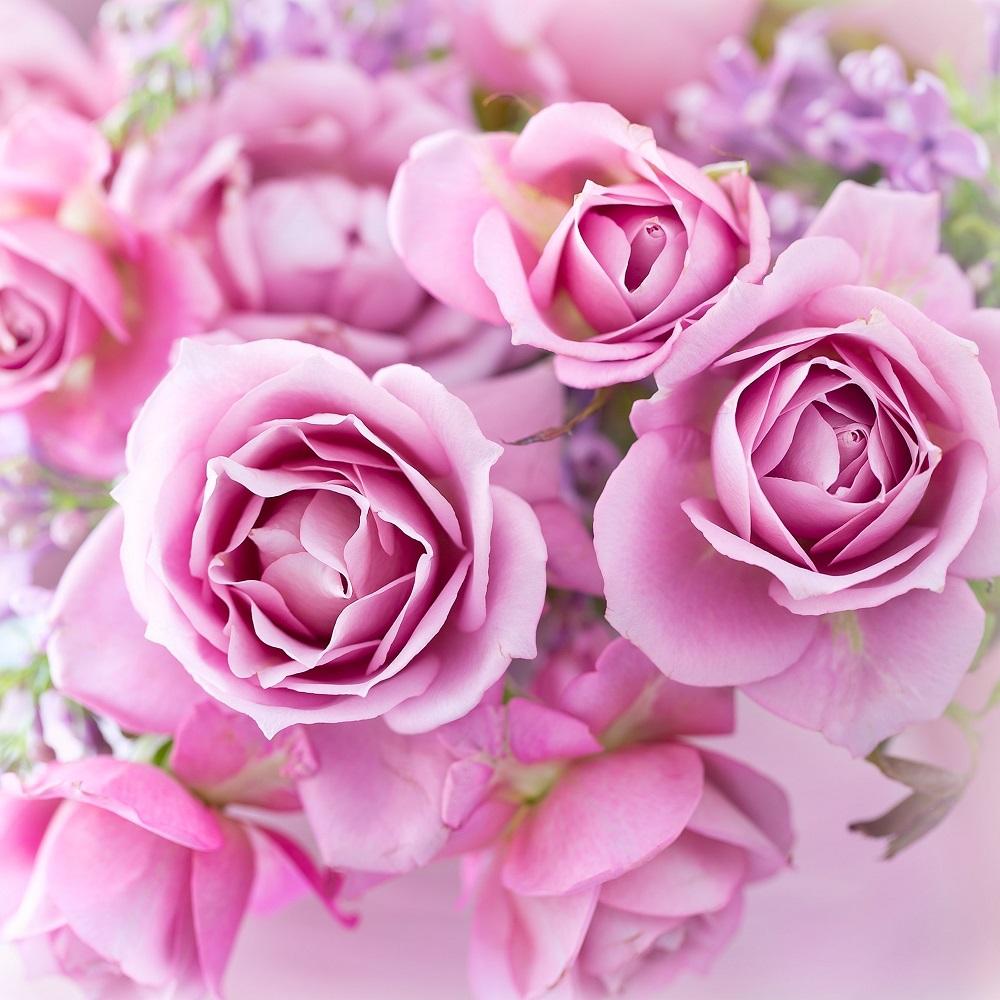 Trandafirul, foto Julia Tsokur