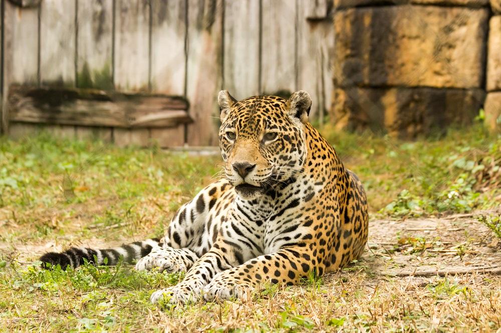 Zoo, foto Dane Jorgensen