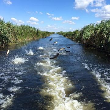 Holbina Trei Bibani, Delta Dunarii