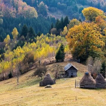 bran-moeciu-foto-mediaimag