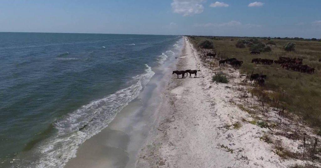 Plaja Perisor